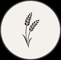 국내산 쌀